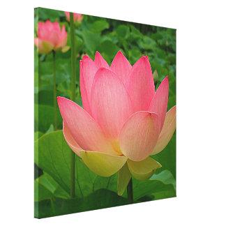 Impressão das canvas - Lotus sagrado