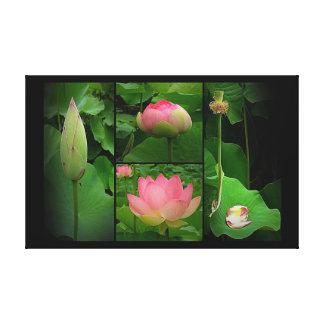 Impressão das canvas - vida de uma flor de Lotus