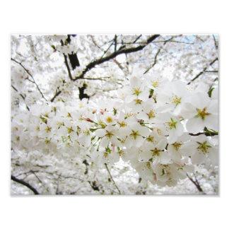 Impressão das flores de cerejeira 12 fotografias