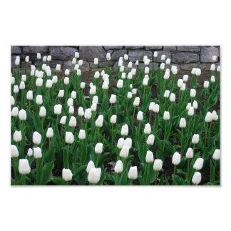 Impressão das tulipas 10 arte de fotos