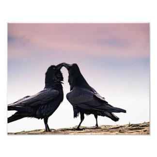 Impressão de fala da foto do corvo impressão de foto