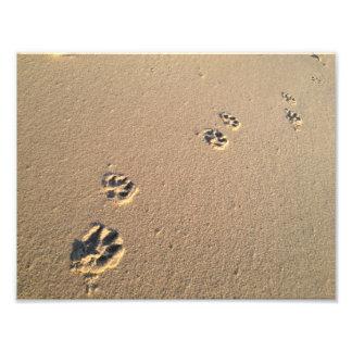 Impressão do cão na areia foto