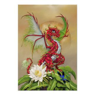 Impressão do dragão 13x19 da fruta do dragão foto
