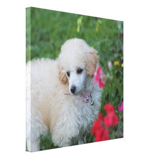 Impressão do envoltório da galeria do cão de