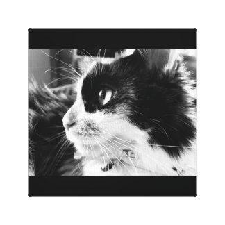 Impressão do gato de chita