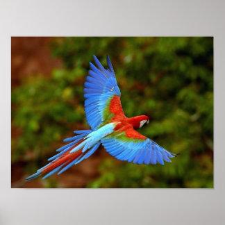 Impressão do Macaw do vôo