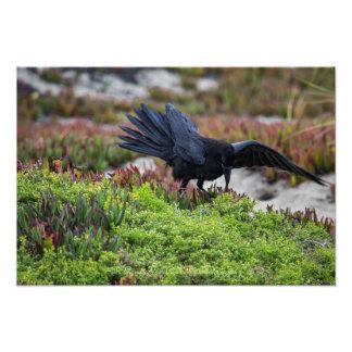 Impressão do poster da asa do corvo impressão de foto