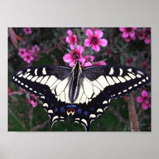 Impressão do poster das canvas de Swallowtail 8x11
