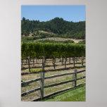 Impressão do poster dos campos da uva do vinhedo