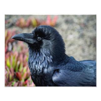 Impressão elegante da foto do corvo impressão de foto