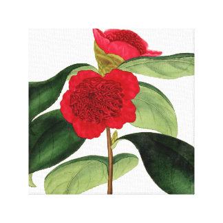 Impressão Em Canvas 18a ilustração do C. da camélia Japonica do `'