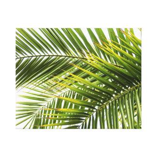 Impressão Em Canvas A palmeira sae da foto tropical do verão