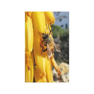 Impressão Em Canvas Abelha em uma flor de Vera do aloés