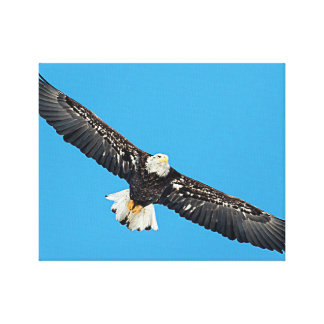 Impressão Em Canvas Águia americana em vôo