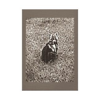 Impressão Em Canvas Americano Shorthair no sepia