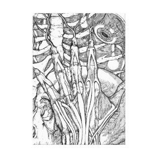 Impressão Em Canvas Anatomia