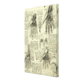 Impressão Em Canvas Anatomia da mão humana por Leonardo da Vinci