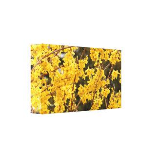 Impressão Em Canvas Arbusto dourado bonito do Forsythia
