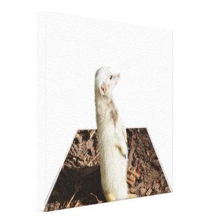 Impressão Em Canvas Arte dimensional branca de Meerkat,