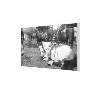 Impressão Em Canvas Arte Photobomber preto e branco da parede do