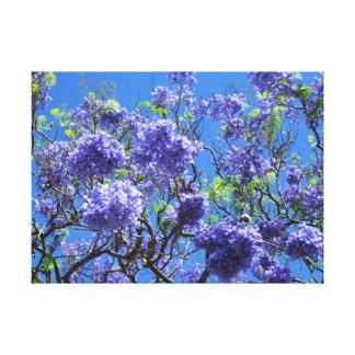Impressão Em Canvas Árvore do Jacaranda