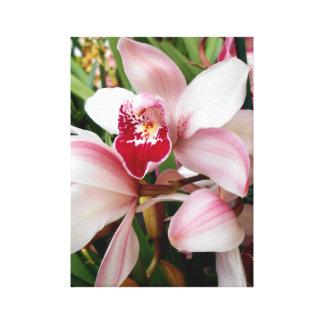 Impressão Em Canvas As orquídeas do Cymbidium coram com o bordo