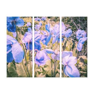 Impressão Em Canvas As papoilas azuis, papoilas Himalaias, três muram