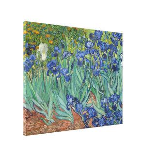 Impressão Em Canvas Belas artes GalleryHD floral das íris de Vincent