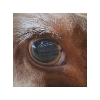 Impressão Em Canvas Beleza no olho da vaca do espectador