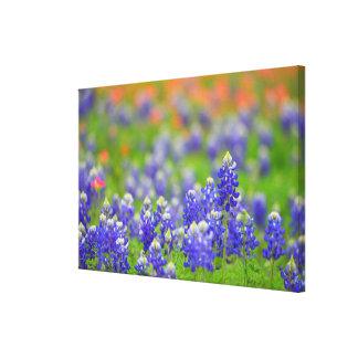 Impressão Em Canvas Bluebonnets macios do foco