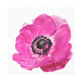 Impressão Em Canvas Branco floral da papoila cor-de-rosa brilhante