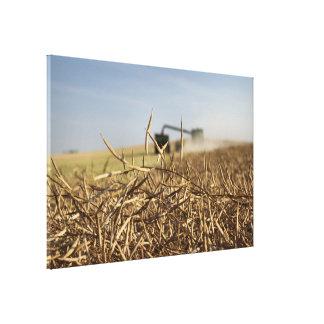 Impressão Em Canvas Carro da grão da liga da colheita de Canola
