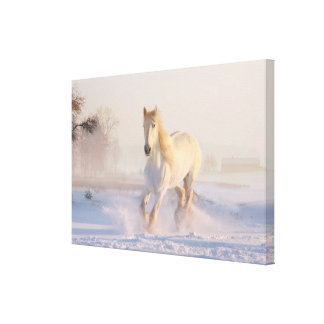 Impressão Em Canvas Cavalo branco bonito que galopa na neve