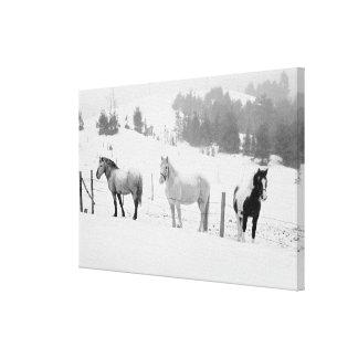 Impressão Em Canvas Cavalos no rancho