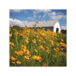 Impressão Em Canvas Celeiro e wildflowers