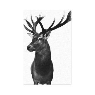 Impressão Em Canvas Cervo