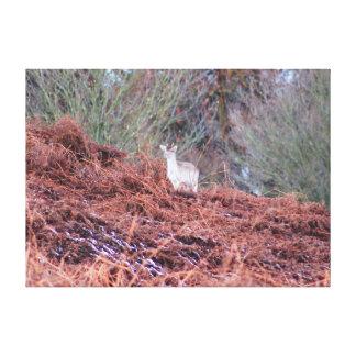 Impressão Em Canvas Cervos em um monte