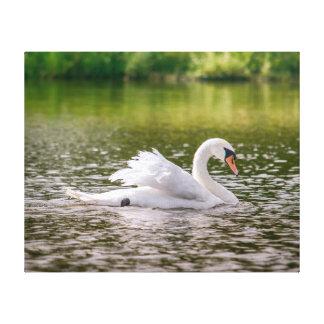 Impressão Em Canvas Cisne branca em um lago