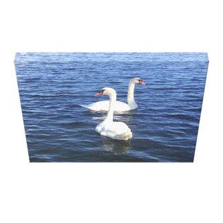 Impressão Em Canvas Cisnes na água