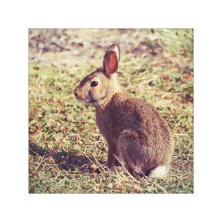 Impressão Em Canvas Coelho de coelho bonito na foto da natureza da luz