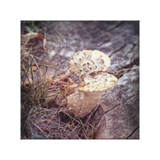 Impressão Em Canvas Cogumelo da asa dos falcões na terra