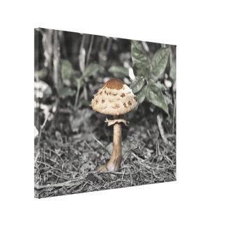 Impressão Em Canvas Cogumelo na floresta