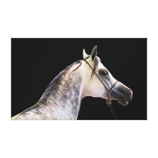 Impressão Em Canvas coleção do cavalo. branco árabe