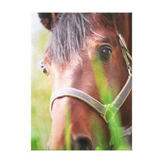 Impressão Em Canvas coleção do cavalo. fim acima