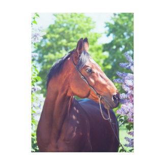 Impressão Em Canvas coleção do cavalo. Trakehner. primavera