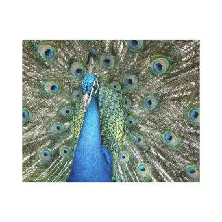 Impressão Em Canvas Cores do pavão