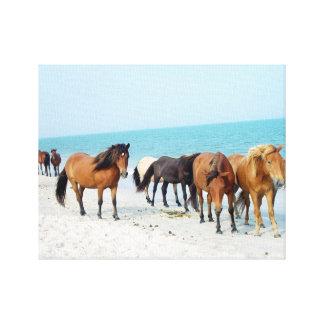 Impressão Em Canvas Costa de mar nacional Maryland de Assateague dos
