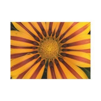 Impressão Em Canvas Daisybush alaranjado