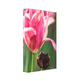 Impressão Em Canvas Duas flores da tulipa