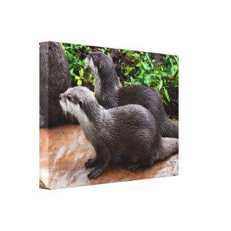 Impressão Em Canvas Duas lontras cinzentas,